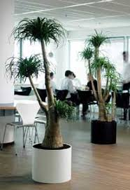 interior landscaping office. Interior Landscapes Taunton | Florida Plantscapes Office Plant Displays Somerset/Interior Landscaping Taunton/Office Plants Somerset/Artificial A