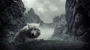 white wolf wallpaper 1920x1080.  White Download In Original Resolution Intended White Wolf Wallpaper 1920x1080