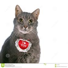 valentine cat images. Fine Cat St Valentine S Day Cat Throughout Cat Images L