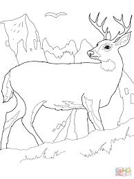 Coloriage Cerf De Virginie En Montagne Coloriages Imprimer