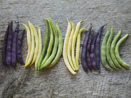 Image result for coloured raw french beans