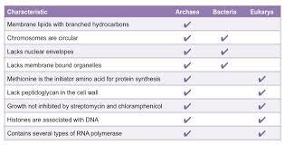 Three Domains Of Life Venn Diagram Archaea Vs Eubacteria Bioninja