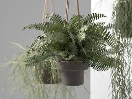 ... hanging pots with plants 3d model max obj c4d mtl 3 ...