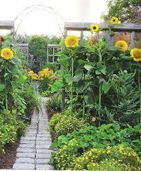 sunflower garden flower garden design