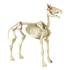 halloween standing skeleton horse