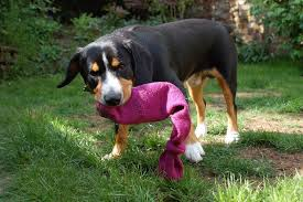 how to make dog toys