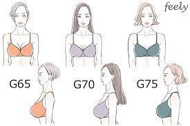 胸 の 大き さ 比較