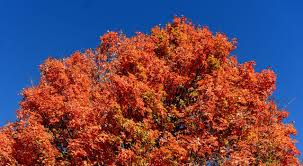 7 mid michigan drives to see fall color