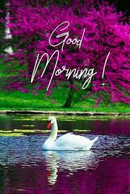 good morning images for whatsapp good