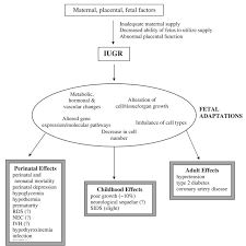 Iugr Chart Pathophysiology Of Intrauterine Growth Restriction Iugr