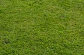 grass field. Grass Field Texture