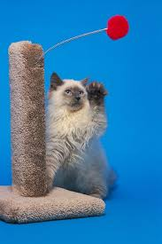 a scratching post is a must have to prevent furniture damage
