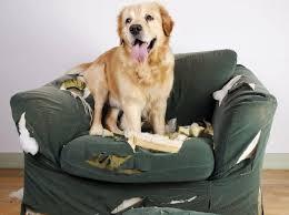 Das was der hund angefressen hat ist nicht der türrahmen (sofern es auf dem foto ersichtlich ist), sondern die glasklemmleiste im lichtausschnitt des türblatts. Welche Schaden Deckt Die Hundehaftpflicht Ab