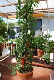 Container Garden Plans Vegetable  Home Outdoor DecorationContainer Garden Plans Tomatoes