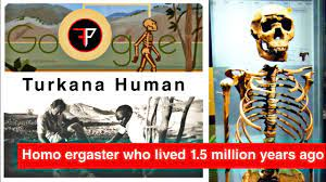 Turkana Human - Homo ergaster who lived ...