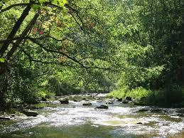 Loyalsock Creek Hatch Chart Diy Guide To Fly Fishing Spring Creek In Pennsylvania Diy