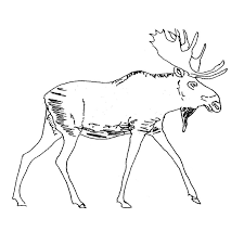 Small Picture Caribou 10 Animals Printable coloring pages