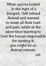 animal rescue quotes and sayings.  And Animal Rescue Sayings  Bing Images Throughout Quotes And