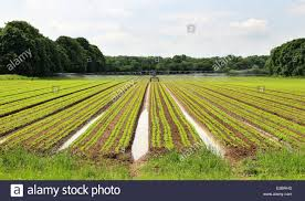Field Of Crops Being Watered With An Irrigation Machine Stock Photo