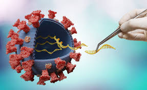 Welche rolle spielt eine dort aufgetauchte neue variante und wie gefährlich ist sie? Corona Virus Indische Mutation Im Landkreis Aufgetaucht Landkreis Landsberg Am Lech