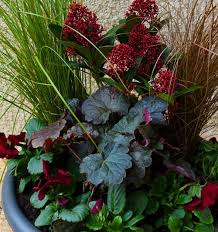 container for winter interest planting