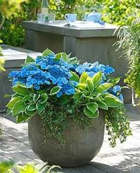 How To Grow A Spectacular Container GardenContainer Garden Ideas For Shade