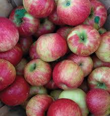 honeycrisp apple malus domestica ft