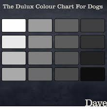 Dulux Colour Chart 2012 The Dulux Colour Chart For Dogs Dave Dogs Meme On Me Me