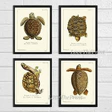 pictures of turtles to print. Simple Print Turtle Art Print SET Of 4 Beautiful Antique Turtles Tortoise Reptile Desert  Nature Natural Science Illustration Intended Pictures Of To N