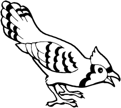 Blue Jay Bird Coloring Page Free Printable Coloring Pages