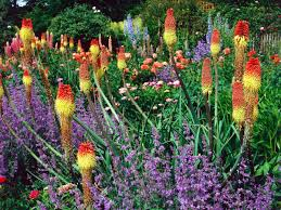 Small Picture Flower Garden Design Ideas HGTV