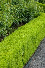 Top Best Plants For Hedges And How To Plant Them Ideas On Pinterest Hedge  Fence Efdcadfed