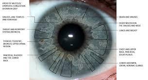 What Is Iridology Chart Eye Iridology Surprising Findings Iris The Picture Of Health