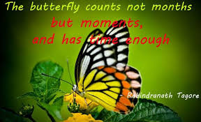 Beautiful Butterfly Quotes Best of Butterfly Quotes The Butterfly Counts Not Months But Moments And