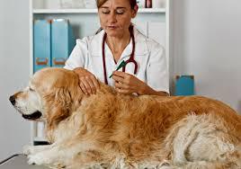 lyme disease in dogs keeping fido safe