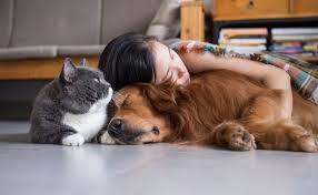 Resultado de imagen para convivencia con los animales perros y gatos