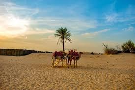 350+ Desert Safari Dubai Dubai United Arab Emirates Pictures [HQ]    Download Free Images on Unsplash