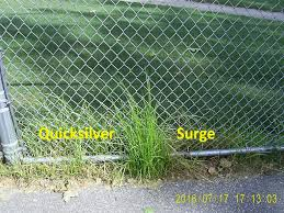 Nutsedge Herbicides Test Lawnsite