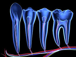 Image result for regrowing teeth stem cell