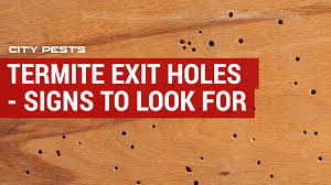 termite exit holes in drywall