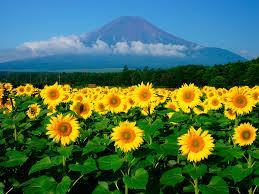 花の都公園夏富士山写真素材館