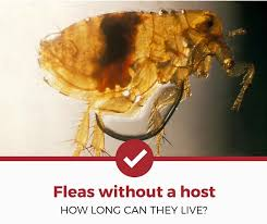 how long can fleas live without a host