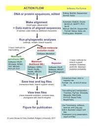 Flow Chart Basics Pdf Phylogenetic Analysis Flow Chart Pdf