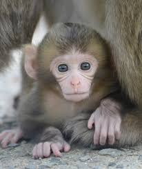 「高崎山 猿」の画像検索結果