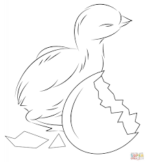 Baby Chick Coloring Pages Best Print Ideas Triamtereneuster Chicks