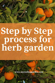 Kitchen Garden India Herb Garden India Step By Step Process For Your Kitchen Garden
