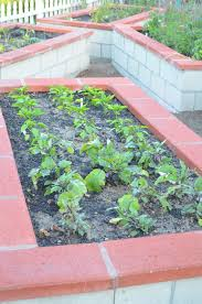 Kitchen Gardens In India Entertaining From An Ethnic Indian Kitchen Raised Beds