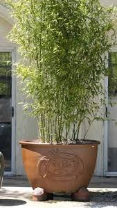 Small Picture 25 best Clumping bamboo ideas on Pinterest Growing bamboo