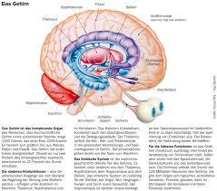 Epileptische anfälle bei kleinkindern