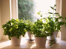 Window Pots Filled With Kitchen Herbs